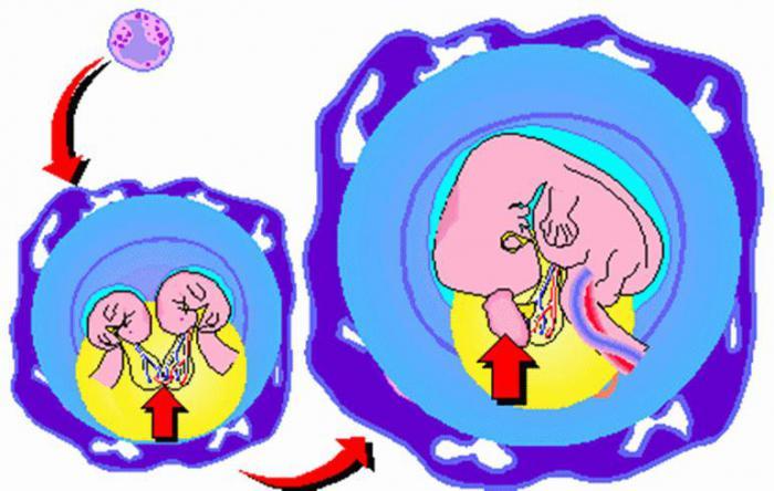 Один на 500.000: В Гонконге родилась девочка, беременная двойней!