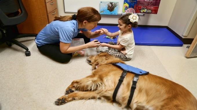 Аутизм, синдром Дауна, ДЦП: как канистерапия помогает исцелять?