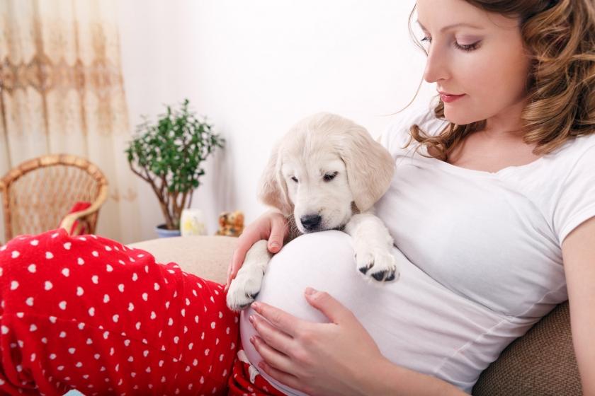 Почему беременным нужны домашние животные: 4 причины