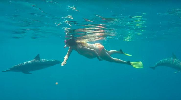 Роды с дельфинами в