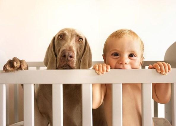 Когда животные и беременность - это хорошо: 2 истории из жизни