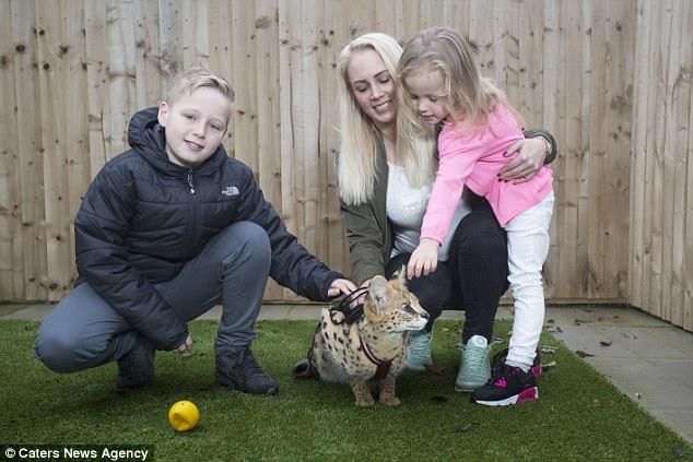 Семья с маленькими детьми из Британии завела необычного питомца