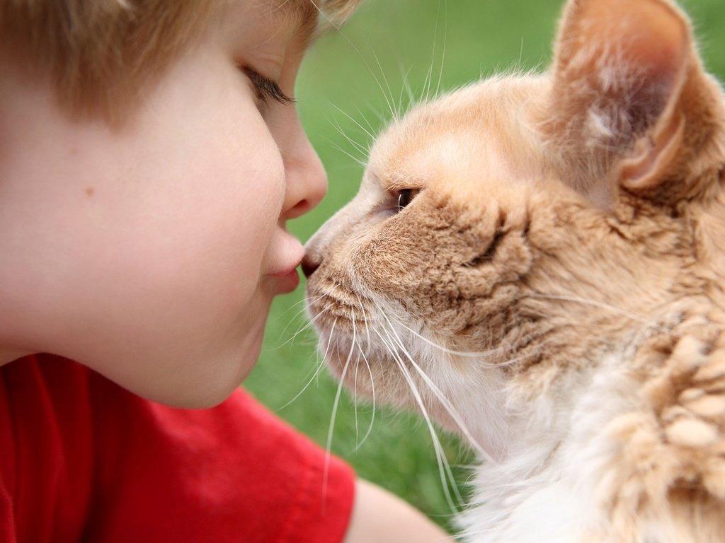 Мама, хочу котика: 5 пород, которые можно завести, если в доме ребенок