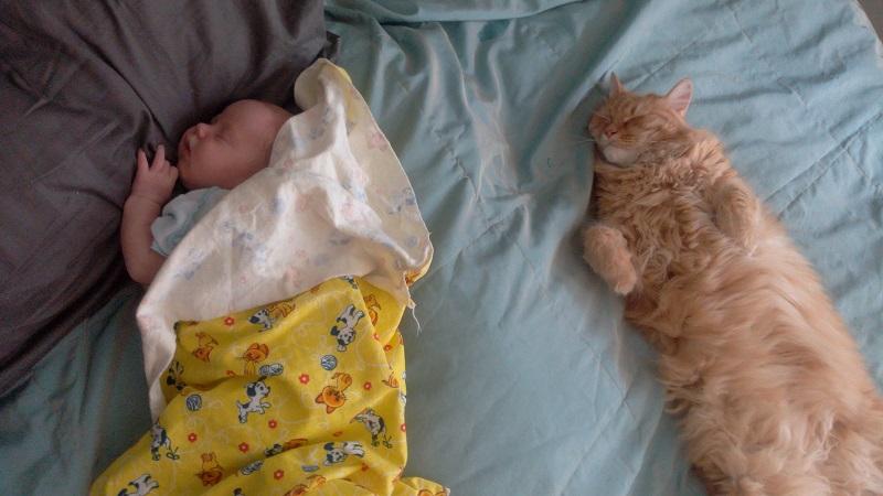 Как проходят будни родителей тройни — история реальной мамы