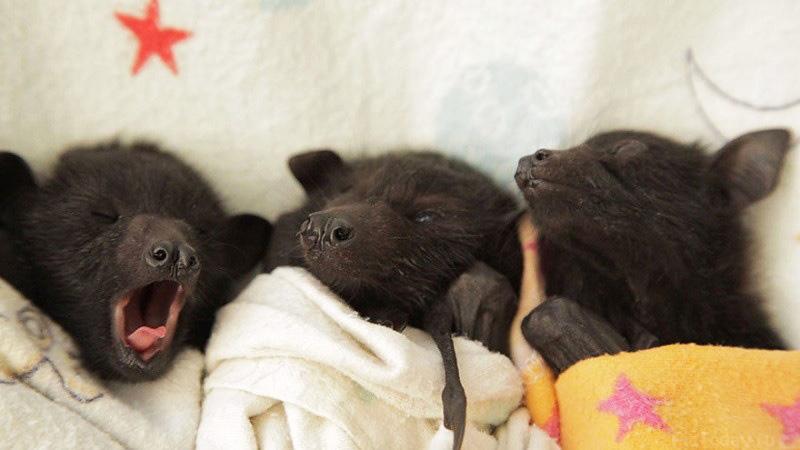 Эти 30 трогательных фото детенышей заставят вас пустить слезу от умиления!