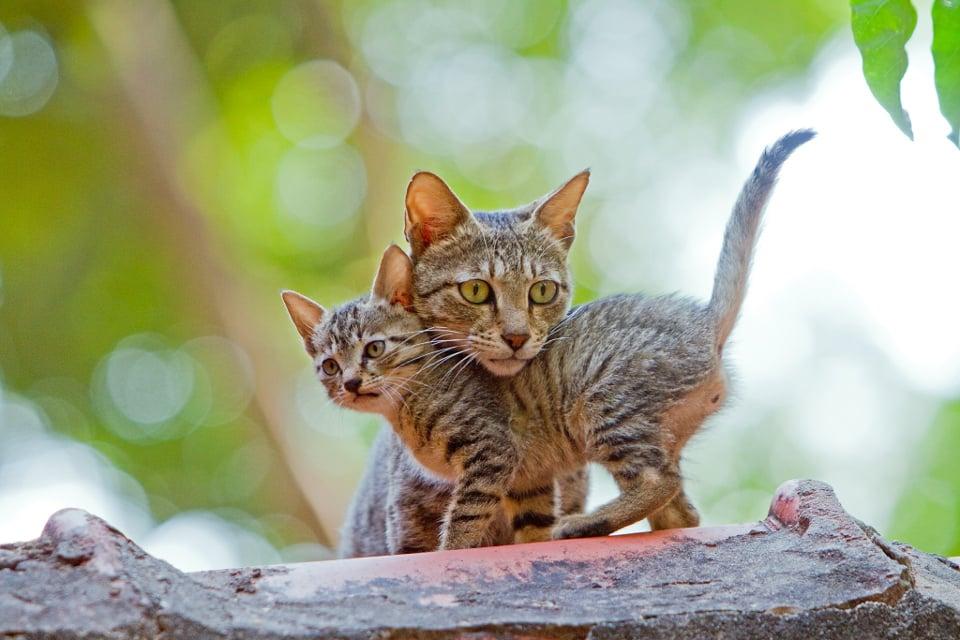 10 фото котят и их мамочек, которые вызывают слезы умиления