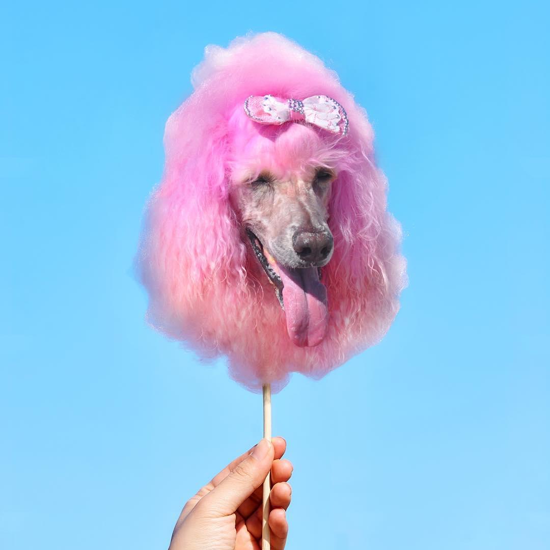 Шпиц в мороженном и бульдог в ягодах - в Instagram сходят с ума от еды с собаками