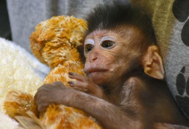 Мама-обезьяна погибла, но то, как себя ведет ее детеныш, умилит даже циника