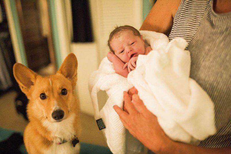 «Этот пес сделал все, чтобы помочь хозяйке родить. Совсем как человек!